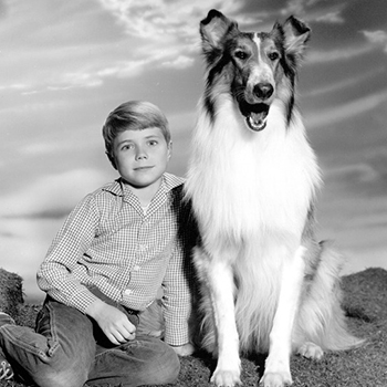 18 adorable dogs from classic television shows