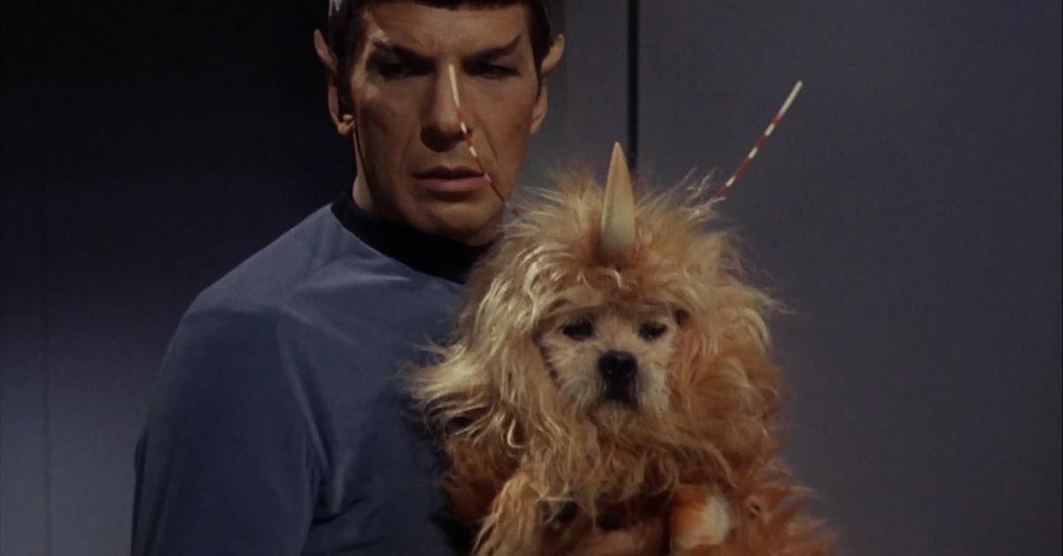 GH3Ws-1445612943-embed-spacedog_spock.jpg