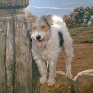 18 adorable dogs from classic television shows scruffy on the ghost and mrs muir publicscrutiny Images