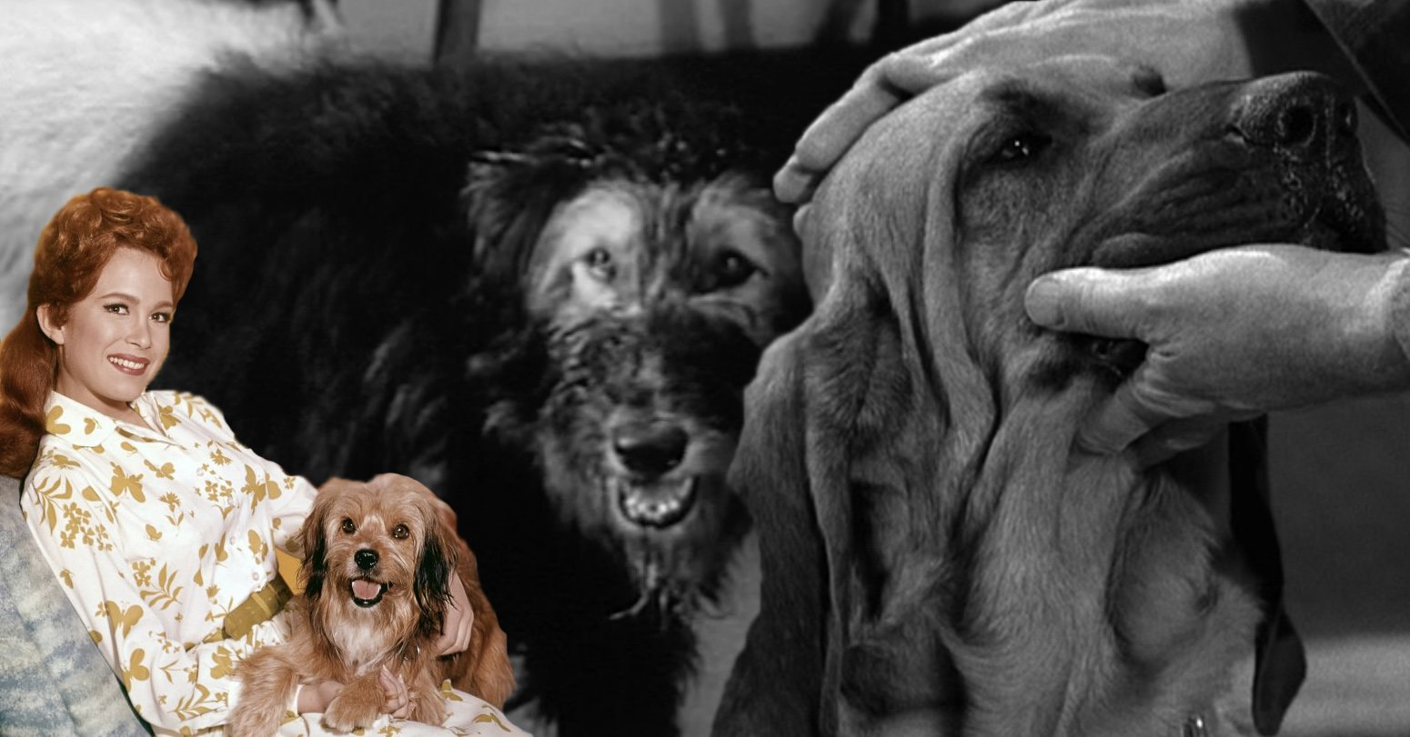 Can you name all these classic sitcom dogs?